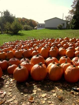 4 Fun Fall events for Commercial Inflatables